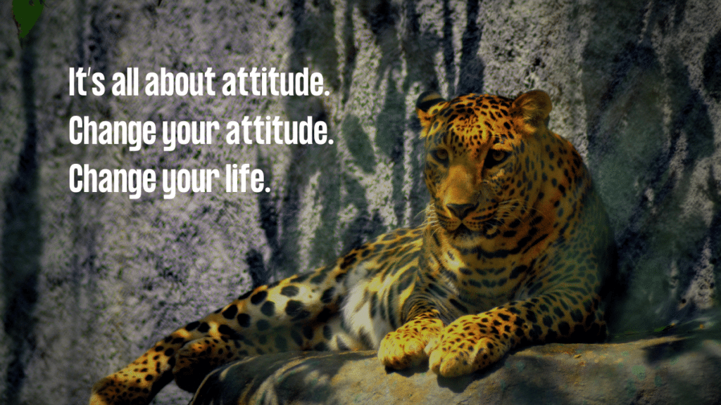 Its All About A Positive Attitude